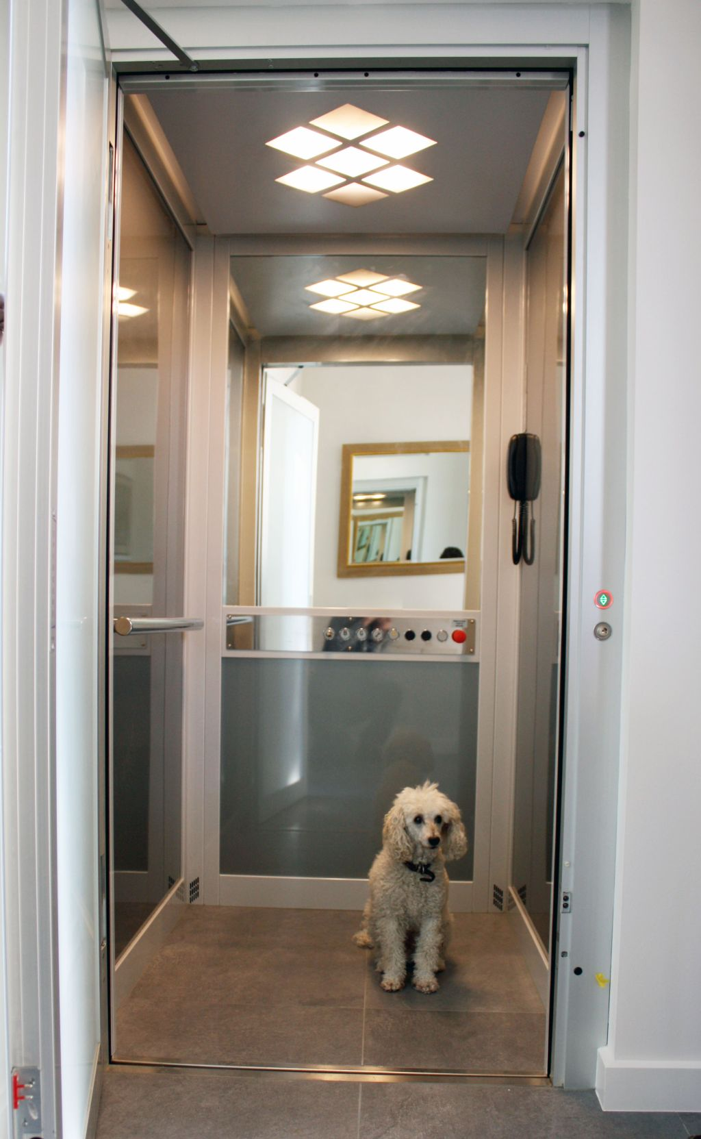 Are lifts pet friendly ?